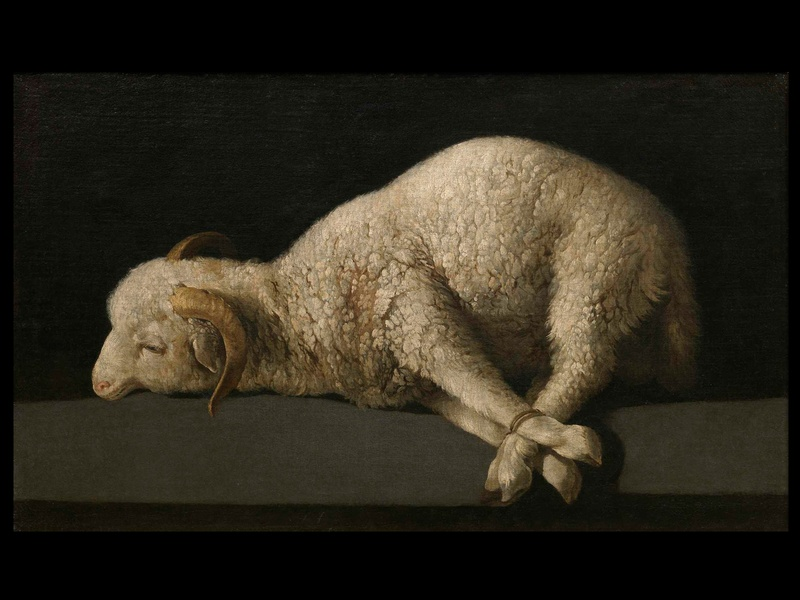 MFAH Prado audio-photo essay, December 2012, Zurbarán, The Lamb of God