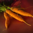 Photo of freshly picked carrots