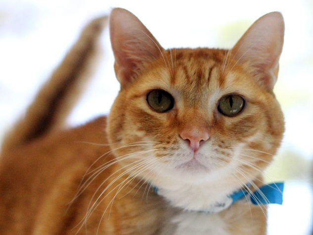 Mojito the cat at SPCA of Texas