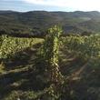 Jane Howze Italy trip Tuscany September 2014 Tuscany vineyards