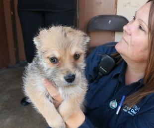 Puppy, Dallas Animal Services
