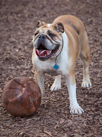 Boneyard Drinkery dog with ball