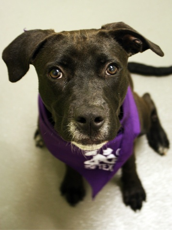 Scrappy the dog at the SPCA of Texas