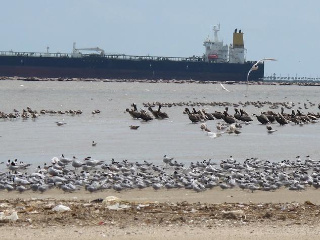7. Katie Galveston oil spill Part 3 Interconnection April 2014 Bolivar Flats..jpg