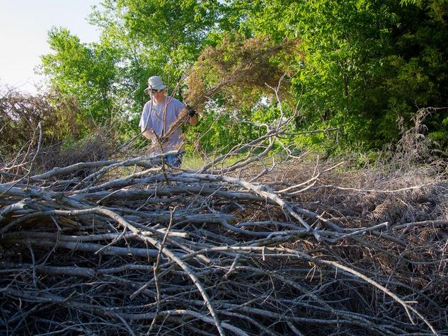 Photo of Marshall Hinsley adding limbs to a brush pile