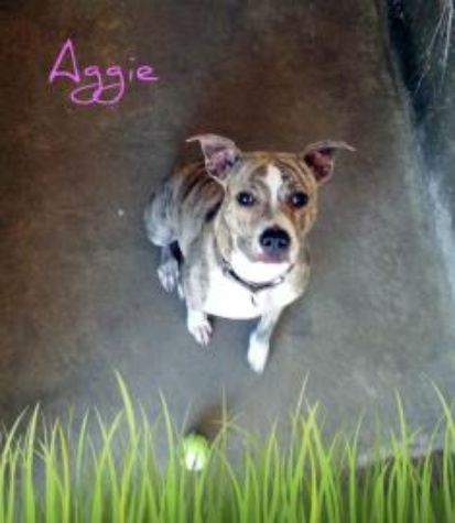 Aggie is ready to be adopted at APA!