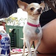 West Alabama Ice House, dog, Pabst Blue Ribbon, beer