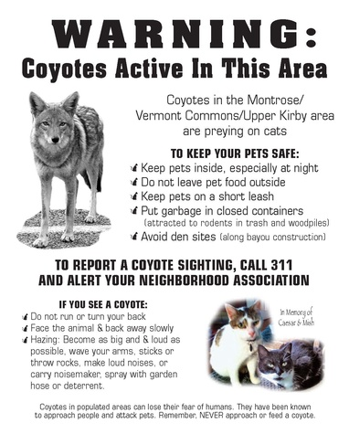 Montrose missing cat poster coyote