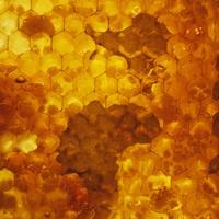 Texas Keeper Cider presents Honey Festival 2016