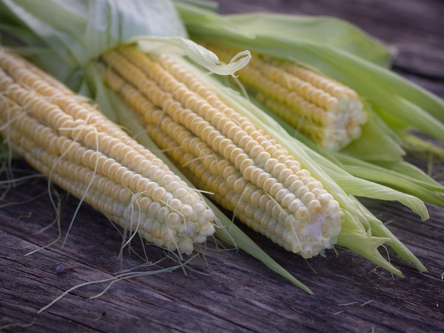 Photo of corn on the cob