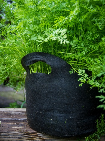 Photo of carrots growing a cloth pot.