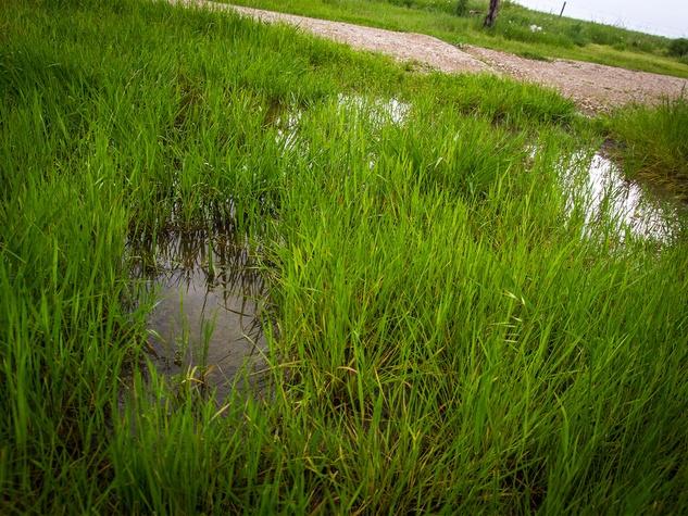 Photo of flooding around grass