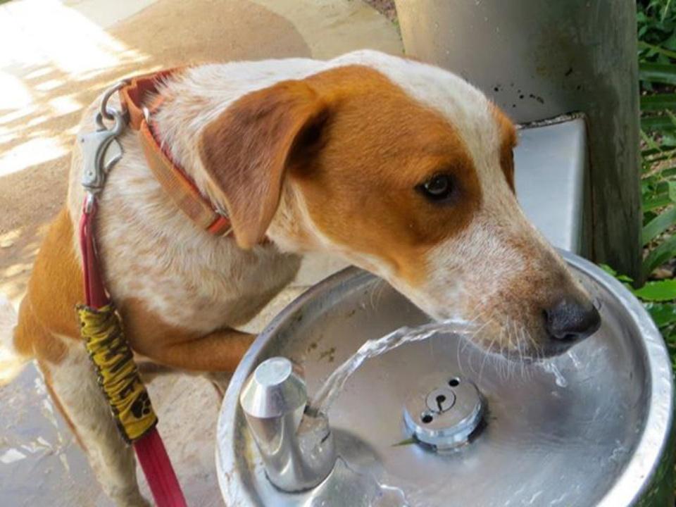 Picture this Pet: Max - Austin Pets Alive