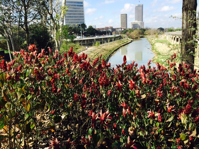 News, Shelby, Buffalo Bayou Park tree planting, Feb. 2015