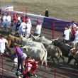 Great Bull Run 12
