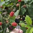 Planted Edible Earth garden