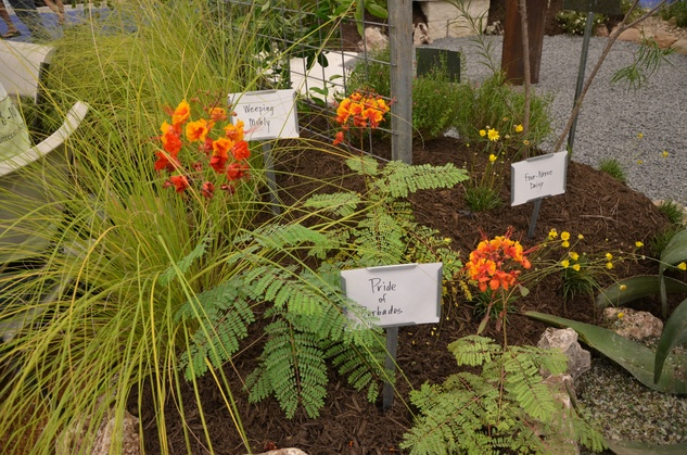 austin photo set: news_aug_beuche_garden show