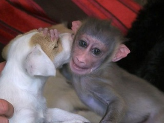 Monkey plays with puppy