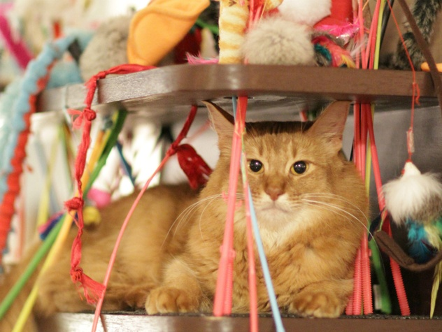 Cat Cafe Calico_Tokyo Japan_2011
