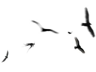 "FORUM 6 presents Marius Zgirdea: ""Migration"" opening day"