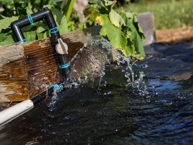 Water gushes out from a broken drip irrigation system