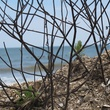 """5 Katie Oxford seaweed April 2015 Plants latch on to it. . ."""""""
