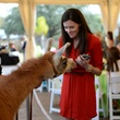 Amanda Beaubout with Fiesta the Llama at Houston's Young Professionals Flock to a Beastly Brunch at the zoo February 2015