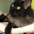 Picture this Pet - Austin Pets Alive - Francis 3 - May 2015
