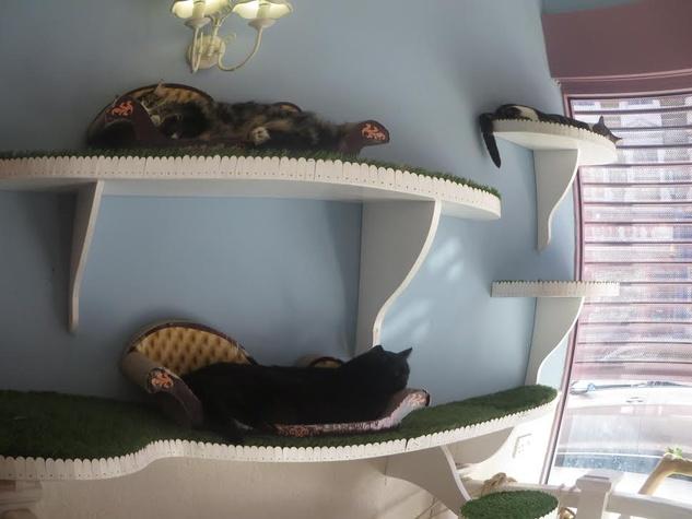 Lady Dinah's Cat Emporium lounging cats