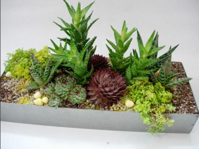 Austin Photo Set: News_Adrienne Breaux_sassy succulents_July 2011_galvonized planter