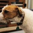 Green Bone, barkery, bakery, March 2013, dog