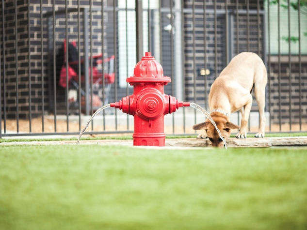 Dog drinking at a fire hydrant at ilume Park
