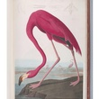 Joseph Campana, MFAH, Made in America, July 2012, Audubon, The Birds of America