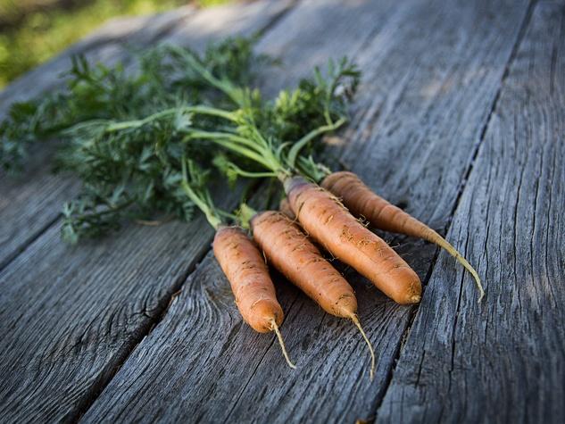 carrots freshly harvested