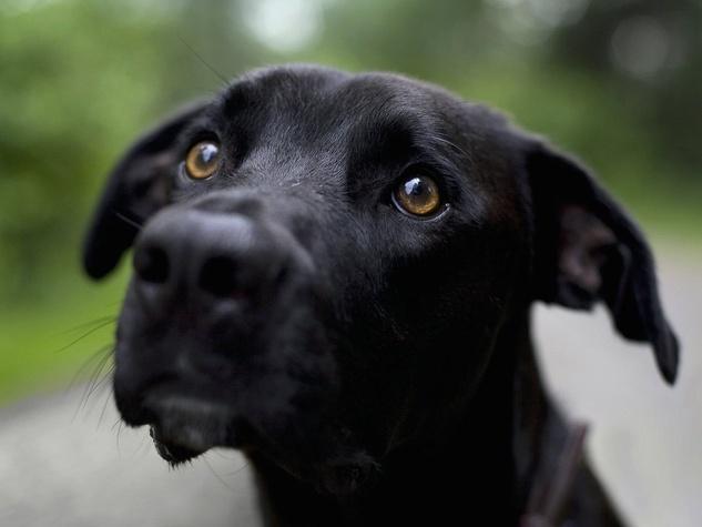 Black Dog Face Closeup