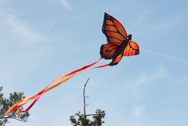 188 Hermann Park Kite Festival March 2014