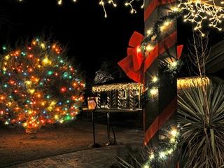austin photo: news_lbj christmas tree_dec 2012