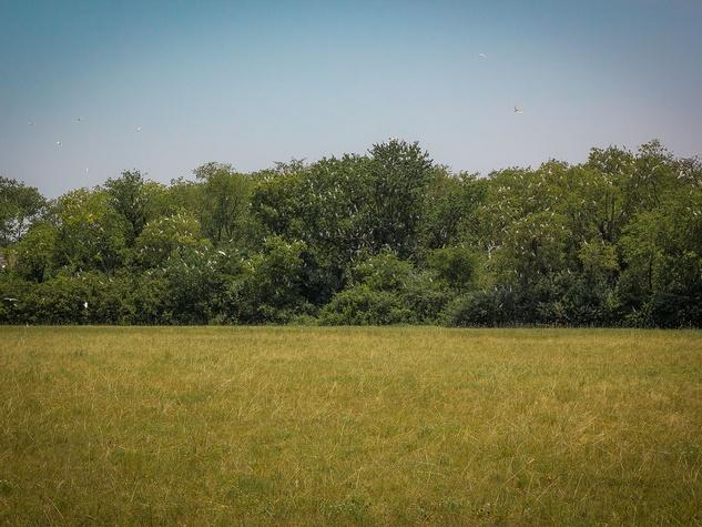 Photo of egret rookery