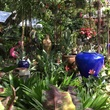 The Great Outdoors Austin nursery plants