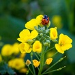 Cloth-of-Gold with a ladybug