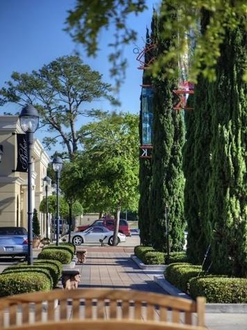 Uptown Park tall trees and sidewalk