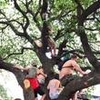 Summer Fest trees