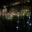 News, Shelby, Field of Light, Nov. 2014
