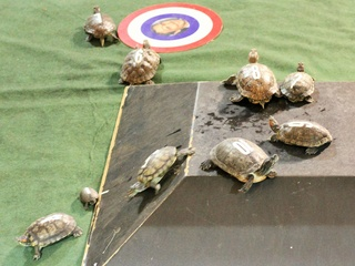 Little Woodrow's presents Turtle Race Thursdays