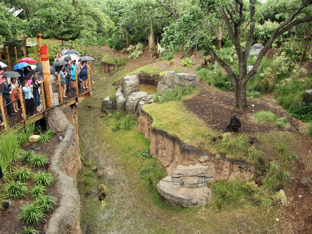 Houston Zoo gorillas YP Overview of outdoor space