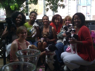 Dog party at Pooch Patio in Dallas