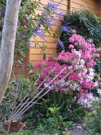 Louisiana springtime in Louisiana flowers