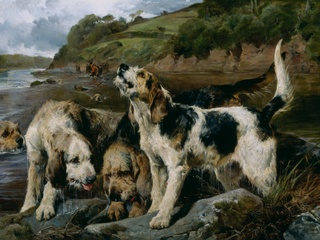 Cats and Dogs Blanton