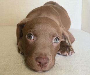 Irving Convention & Visitors Bureau presents National Dog Day