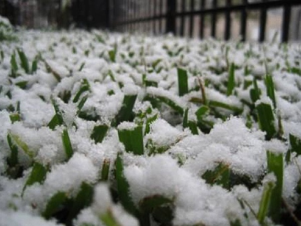 News_snow_grass